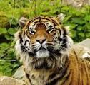 Spannende dag vol dieren en avontuur